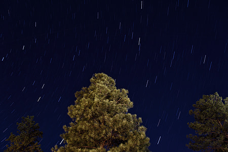 green trees under starry sky at night time