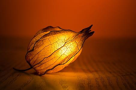 orange petaled flower light fixture