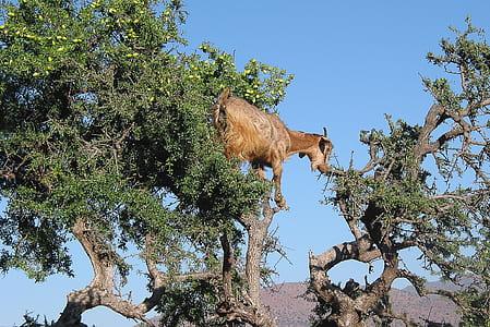 brown goat climbing on tree at daytime