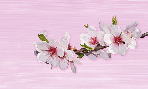 white and red petaled flowers on pink board