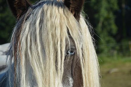 macro photography of gray horse