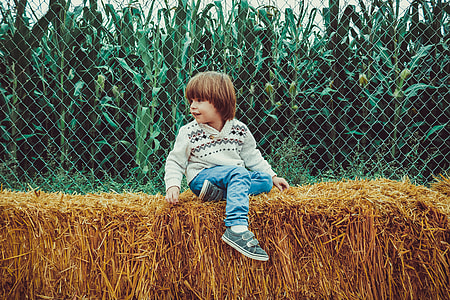 toddler wearing white sweater and blue jeans sitting on brown hay at daytime