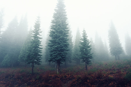 trees with fogs panoramic photgraphy