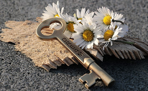 grey skeleton key and daisy flowers