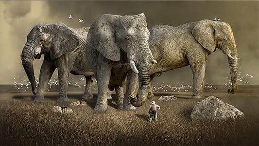 three gray elephants