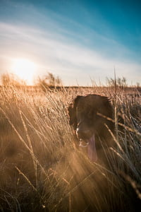 photo of dog in grass during daytime