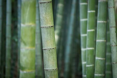 closeup photo of green bamboos