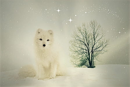 white fox standing on snow covered ground