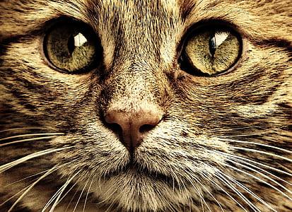 closeup photo of tan cat