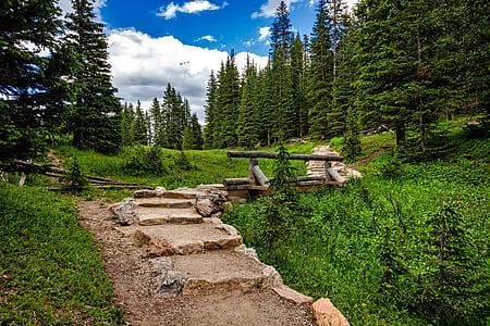brown stone stair beside pine trees