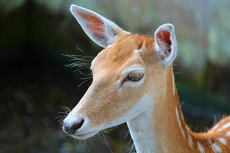 shallow focus of brown deer