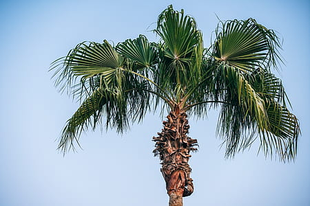 photo of green palm tree during daytime