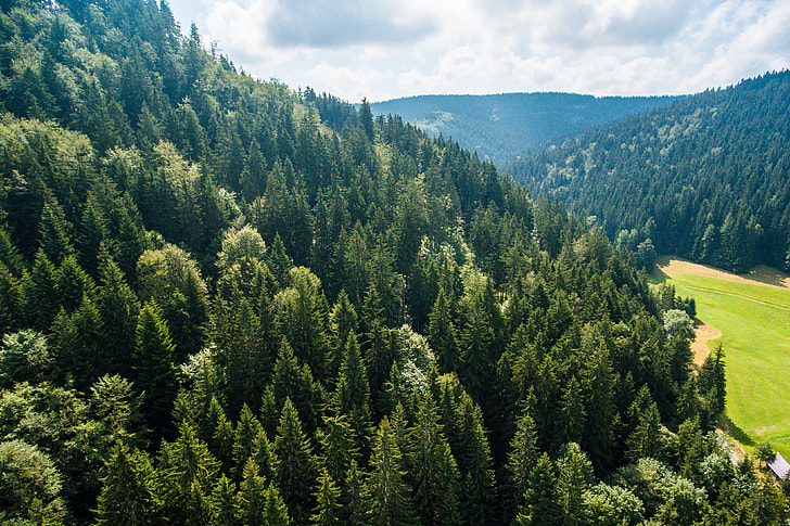 Pure Nature: Above Green Forest on the Hill