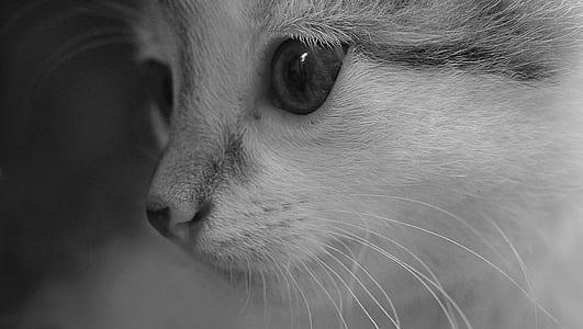 grayscale shot of kitten