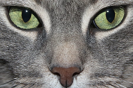 closeup photo of tabby cats face