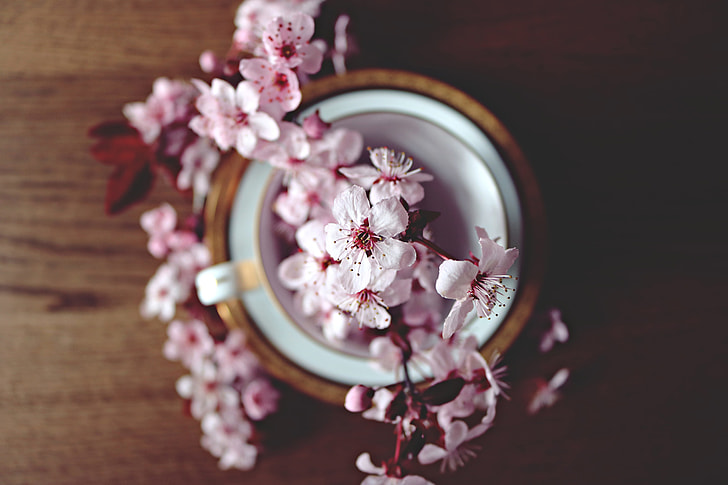 Cherry blossom flowers on table