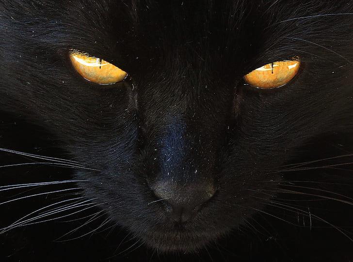 orange eyes black cat