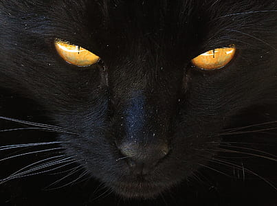 orange eyes black cat