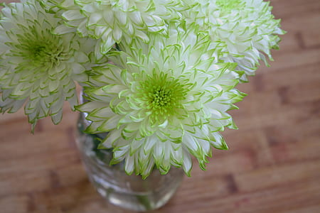 green and white dahlia flower arrangement in vase