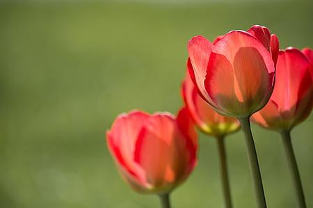 bloom blossom close up flora thumb