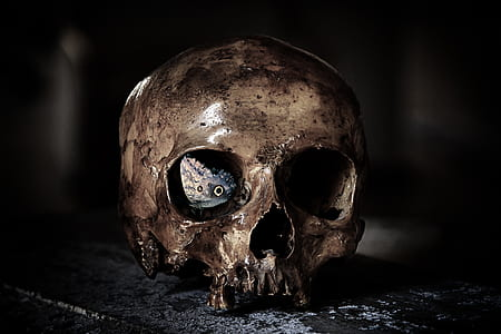 brown skull ceramic figurine