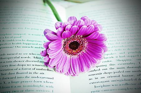 purple petaled flower on the book