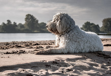 short-coat white dog near sea