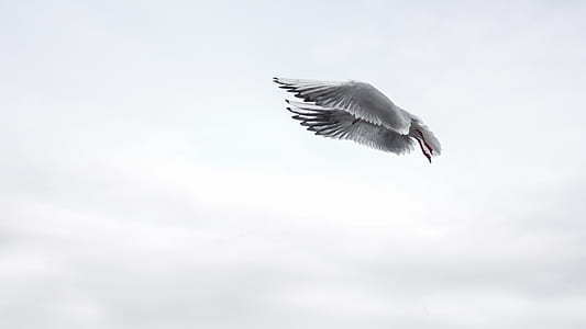 grey gull flying during daytime