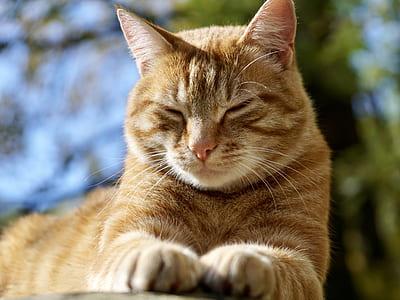 closeup photo of orange tabby cat