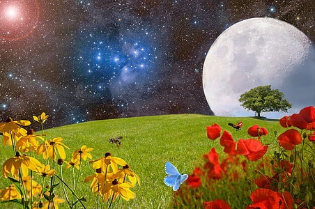 yellow and red flowers under starry night