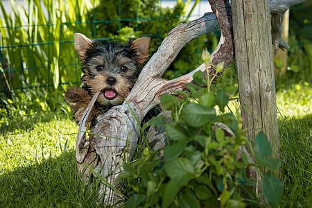 medium-coated black-and-brown dog