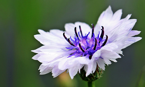 white and purple flower