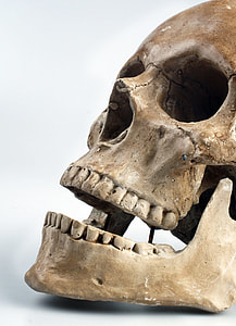 closeup photo of brown skull