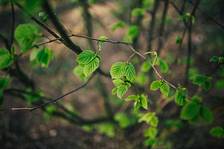 Little green leaves on branches