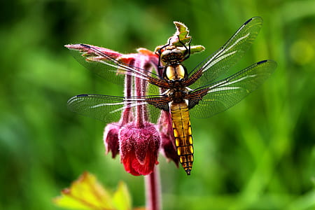 brown and orange dragonfly on red flower