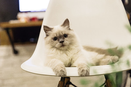 Cat with Large Eyes on Chair