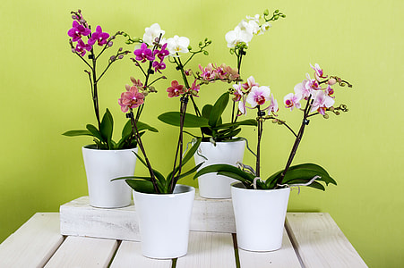 pink and white indoor flowers