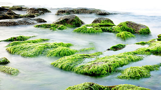 timelapse photography of algae in the sea