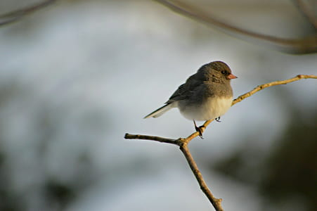 Grey and White Small Bird
