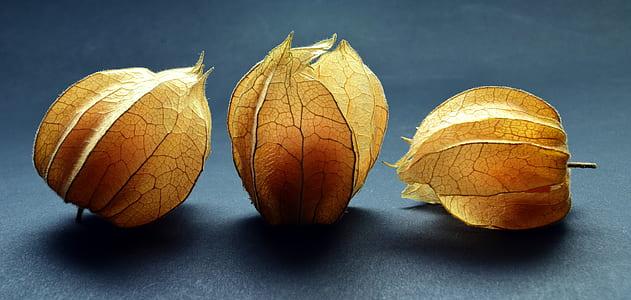 three yellow leaves