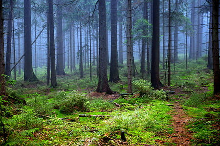 green trees during dawn time