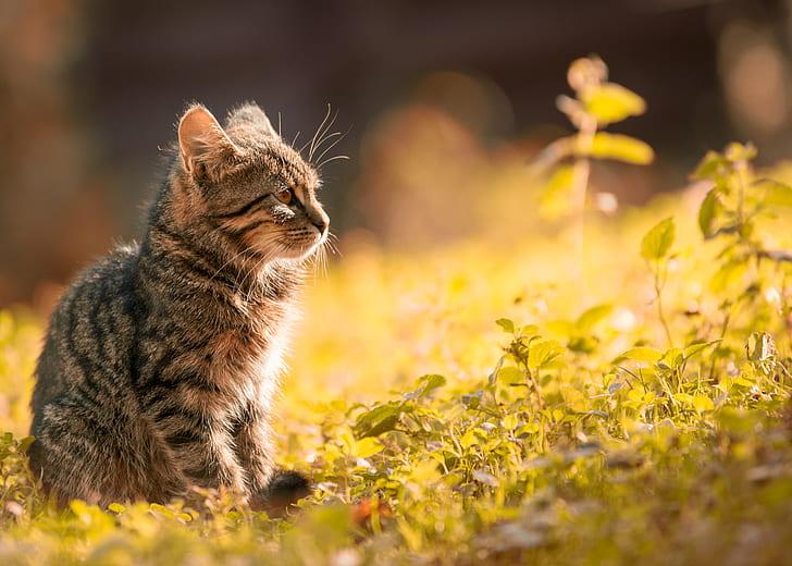 Tabby Kitten Sitting on the Grass