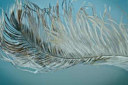 closeup photography of grey feather