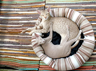 two lying cats on stripe bed wallpaper