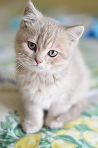 orange kitten in tilt-shift photography