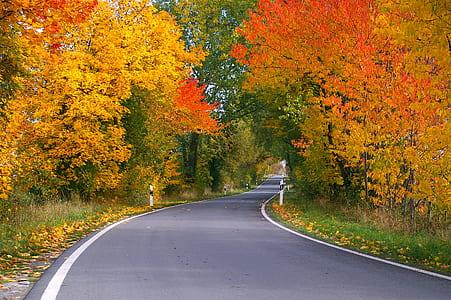 gray road near green and yellow trees