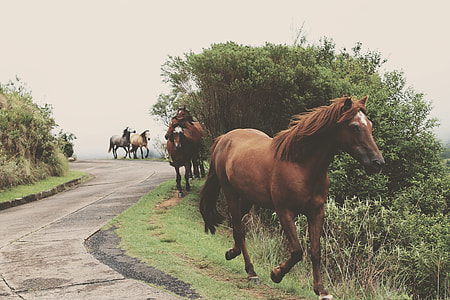 pack of horse walking on side of the road