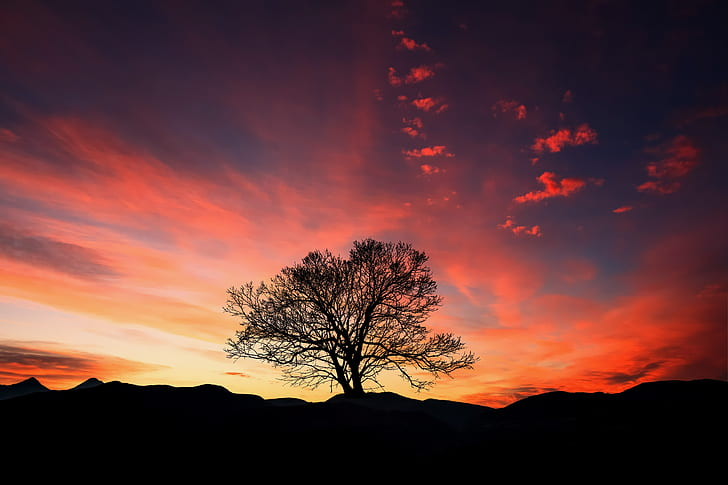 black withered tree during sunset