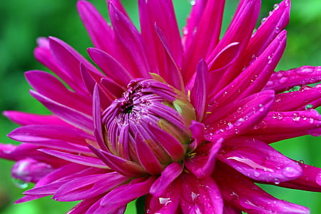closed up photo of pink petaled flower