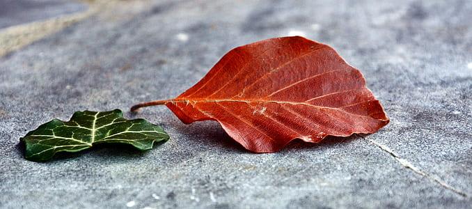 red leaf beside green leaf